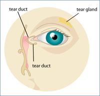 Dry Eye Diagram